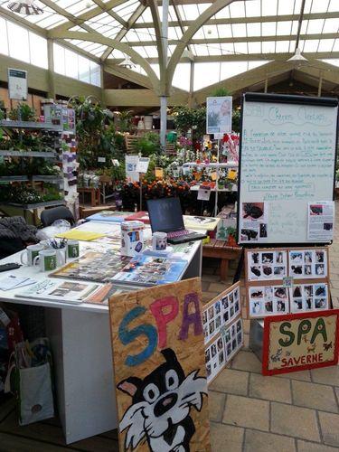 OP Botanic Fegersheim - 22 02 2013 (1)