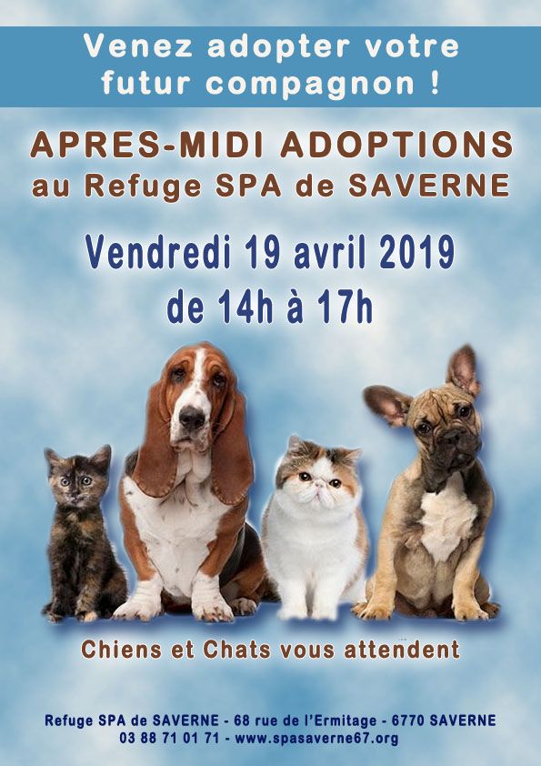 Apres midi adoptions 190419
