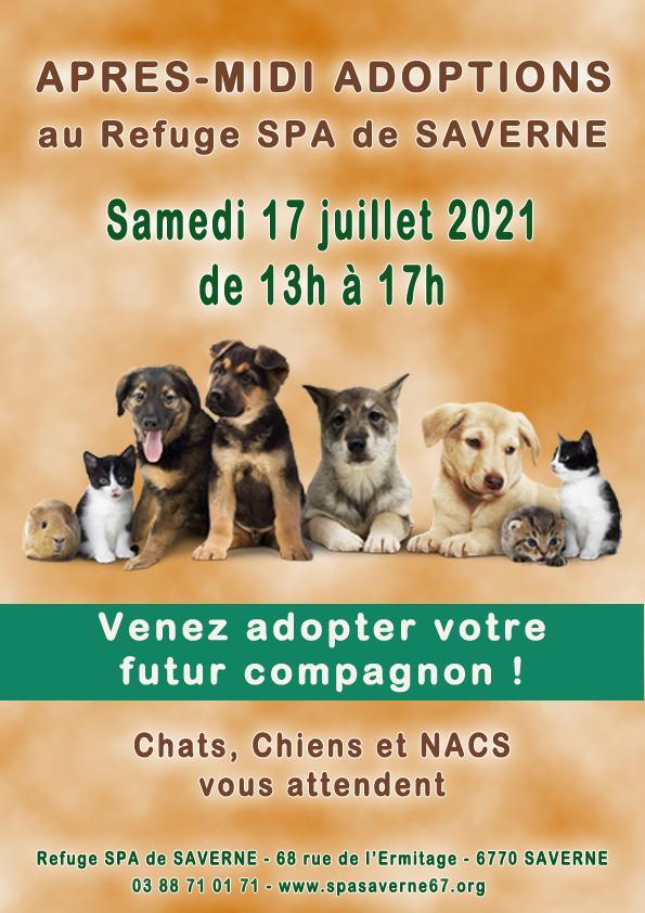 Apres midi adoptions 190621 13a17