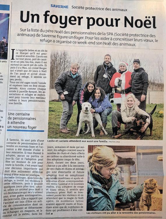 Article spa noel des animaux 12 2017