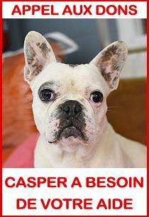 Appel aux dons pour Casper