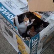 Chats en carton 2