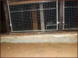 chatterie-10-11-2012-16.jpg