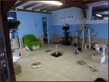 chatterie-19-01-2013-3.jpg