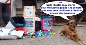 collecte-bouchons-01-06-13-10.jpg