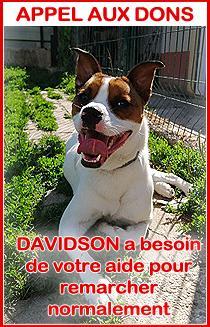 Davidsonappelauxdons