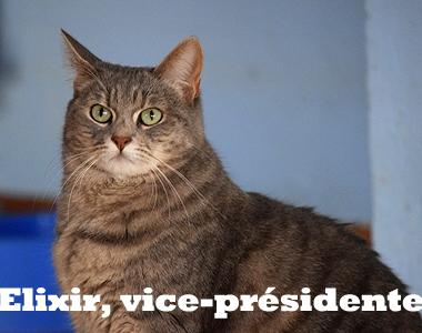Elixirvicepresidente