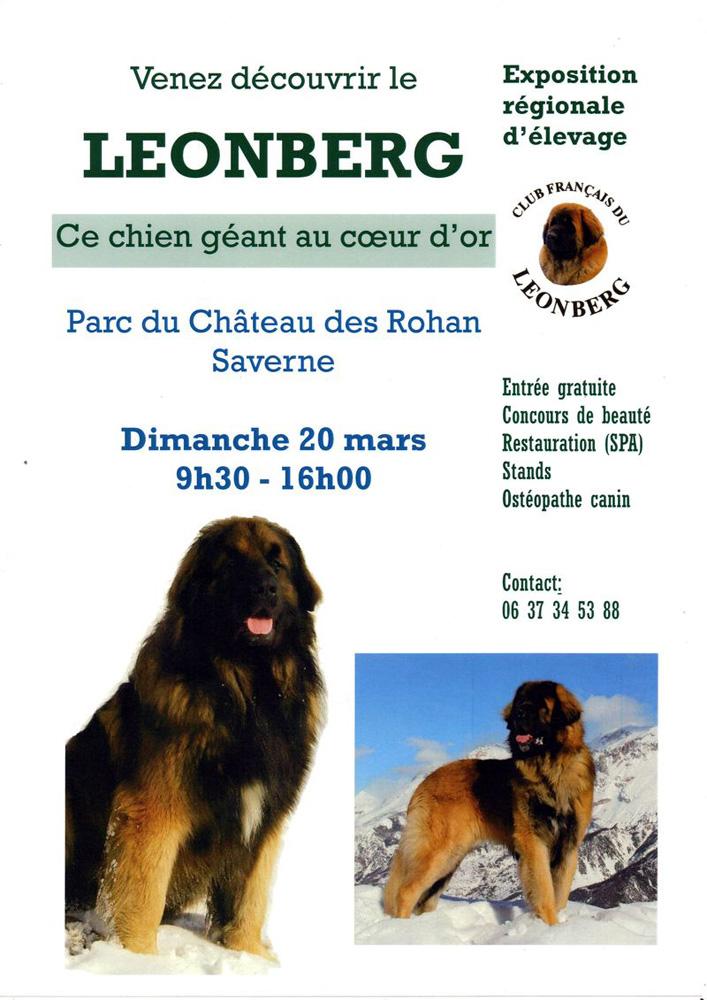Expo leonberg