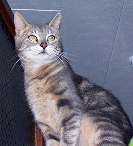 femelle-tigree-gris-090213.jpg