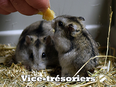 Hamstersvice tresoriers