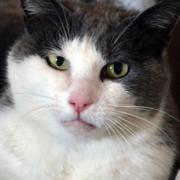 Katzele, femelle, née le 01/06/2012