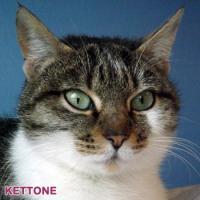 kettone-1.jpg