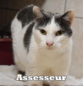 Leoassesseur