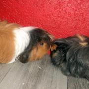 Mina et chipper