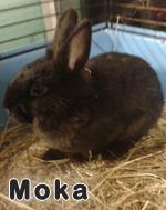 moka-04-11-13.jpg