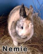 nemie-04-11-13.jpg