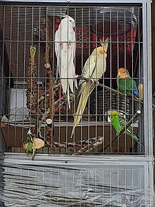 Oiseaux 080421