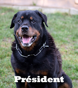 Pachapresident