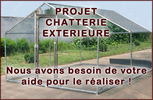 Projet Chatterie