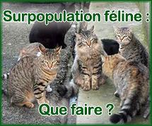 Surpopulationfeline