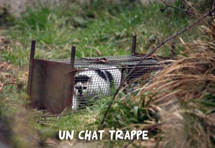 Trappage